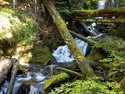 Olympic Peninsula Forests
