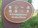 A compassion grass piece