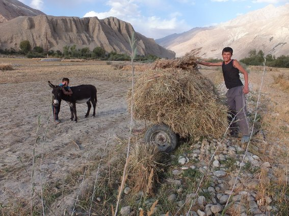 Boy harvesting grain in Zong