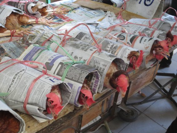 Chickens wrapped in newspaper at the Sibu market