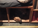 Dog sleeping in a cubby at illiterati
