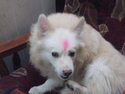 Dog with bindi