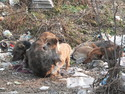 Dogs huddles in pile of trash