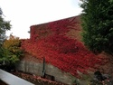 Fall creeping across a wall