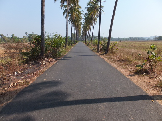 Country road in Goa