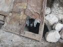Goat sleeping under door