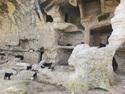 Goats in hasankeyf