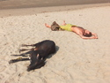 Guy and cow sunbathing