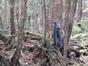 Hanging coat in aokigahara