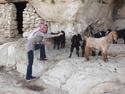 Malak and goats
