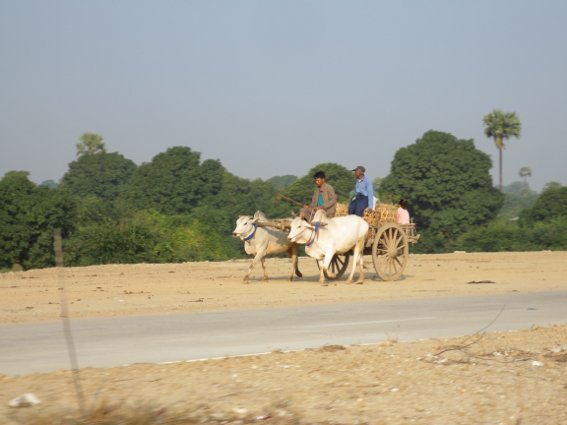Ox cart on the way to Mandalay