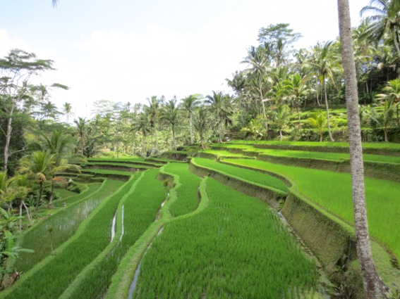 Steep, terraced rice patty
