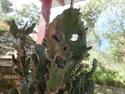 Spooky cactus