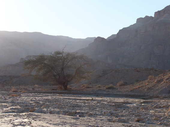 A tree in the desert